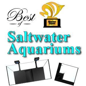 Best Saltwater Aquariums: Our Top Picks