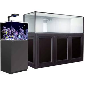 Ready to Move Into a Bigger Tank? Tips to Prep for the New Tank