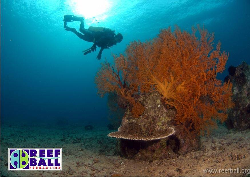 Image courtesy of the Reef Ball Foundation