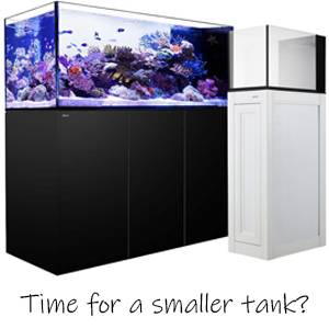 How to Downsize to a Smaller Tank: Tips and Pointers