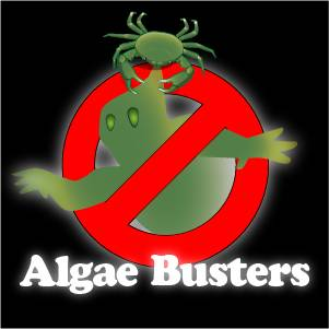 The Algae Buster Profiles: Part One