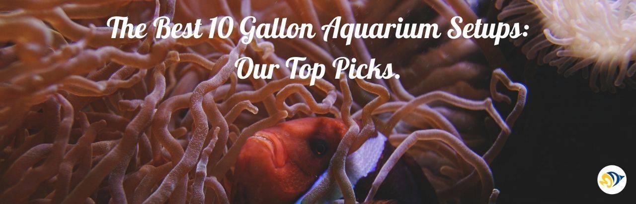 The Best 10 Gallon Aquarium Setups: Our Top Picks.