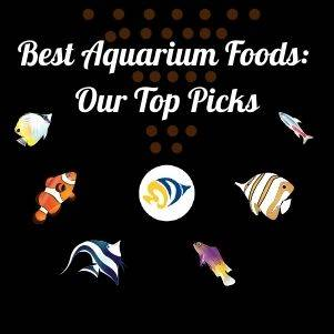 Best Fish Foods: Our Top Picks
