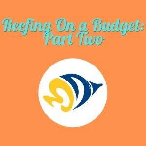 Reefing On a Budget: Part Two