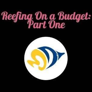 Reefing On a Budget: Part One