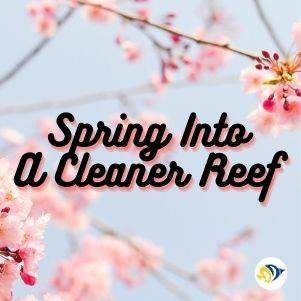 Spring Into a Cleaner Reef