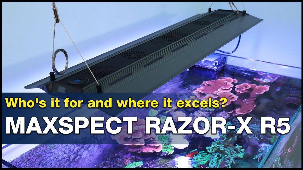 Does lighting your reef seem expensive? Maybe a Maxspect Razor-X R5 will change your mind!
