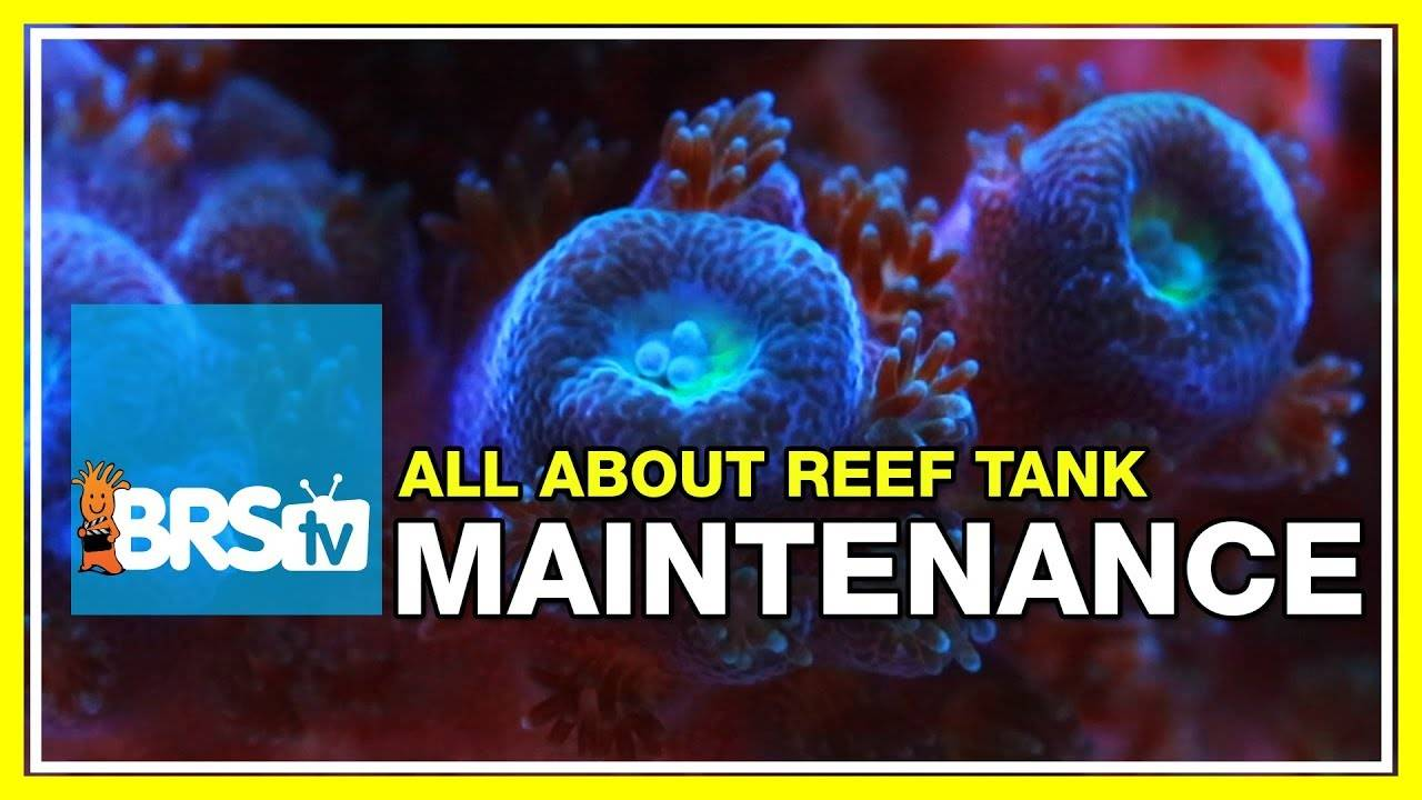 Week 42: Reef Tank Maintenance: 5 minutes a day can transform your tank: 52 Weeks of Reefing #BRS160