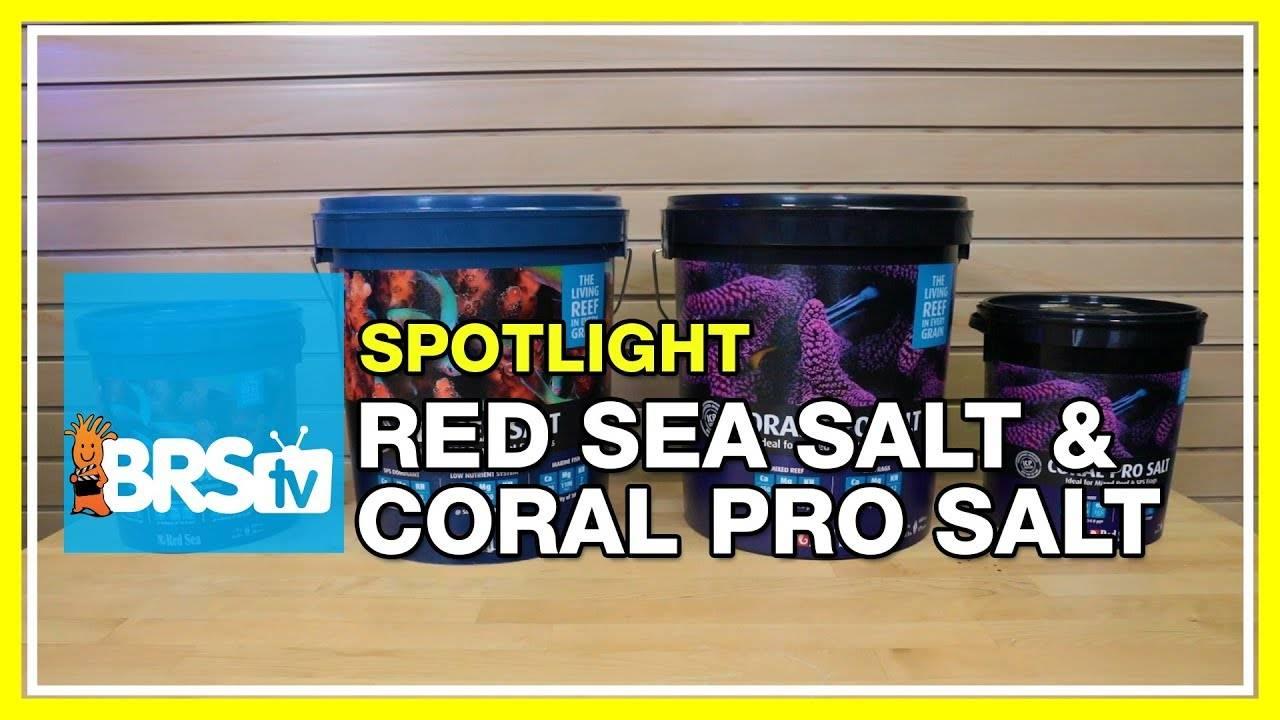 Spotlight on Red Sea Aquarium Salt and Coral Pro Salt - BRStv