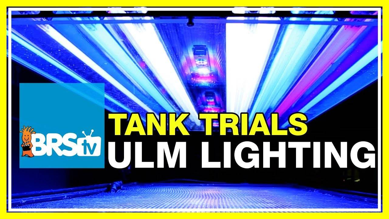 Lighting for Ultra Low Maintenance Reef Tanks | BRStv Tank Trials Ep11