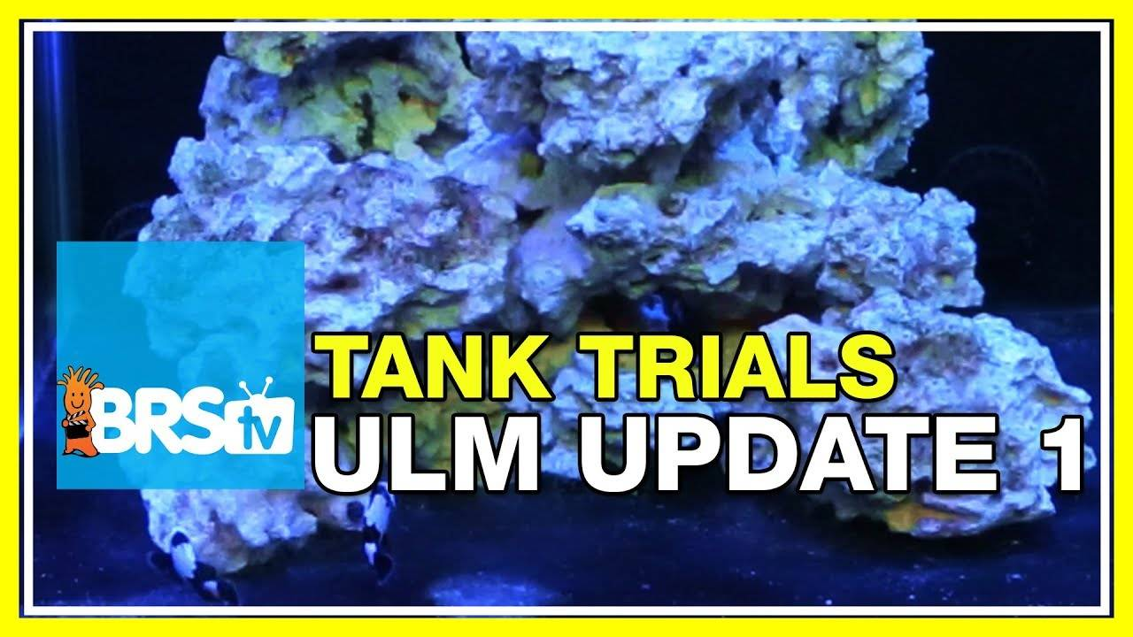 ULM Tank Update, Are Things Going To Plan? | BRStv Tank Trials Ep16