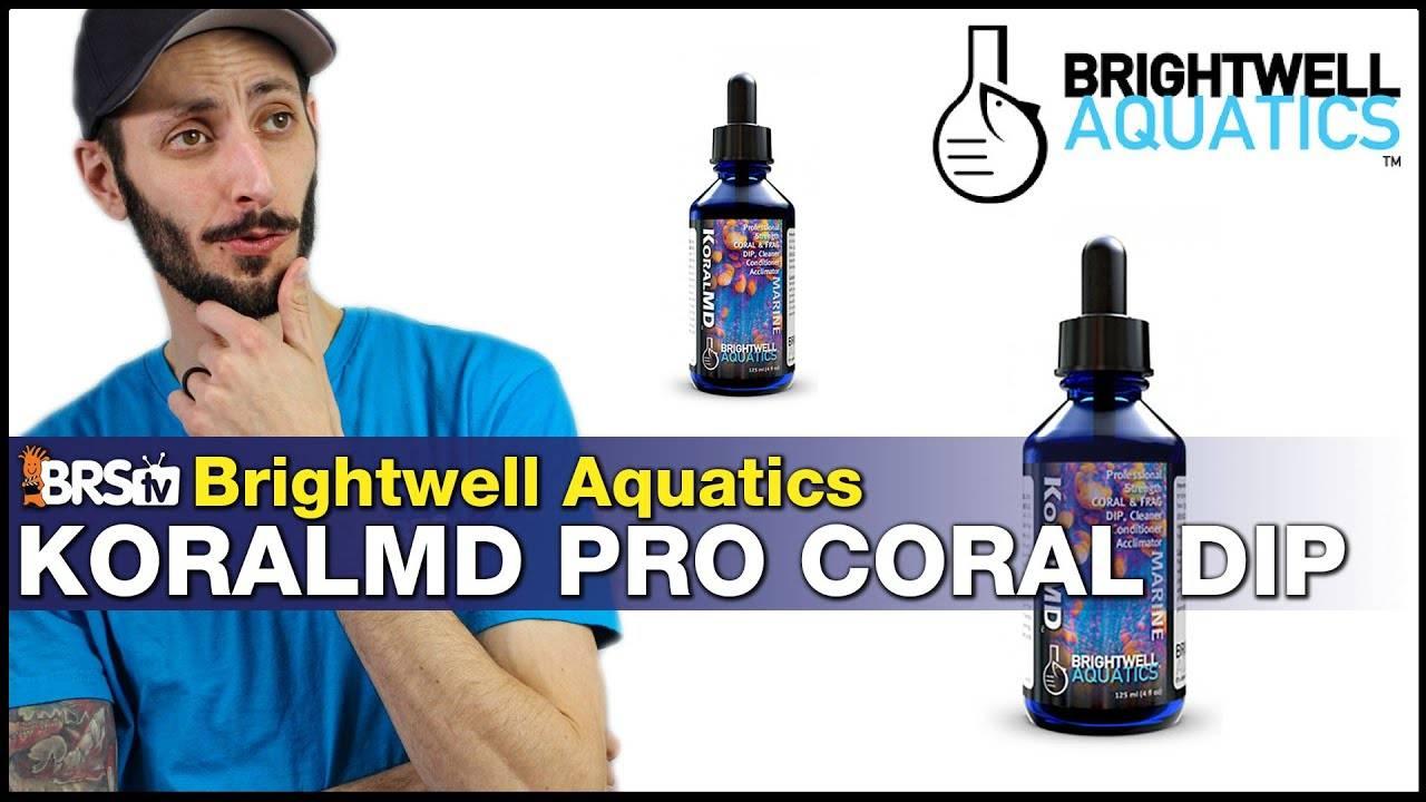 BRStv Product Spotlight - Brightwell Aquatics Koral MD Pro