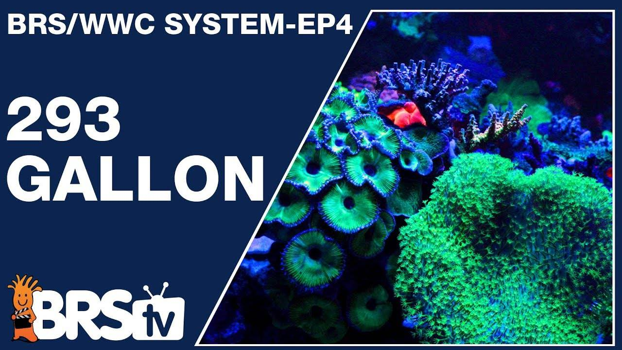 This is how to keep a 293 gallon Mixed Reef Tank - The BRS/WWC System Ep4