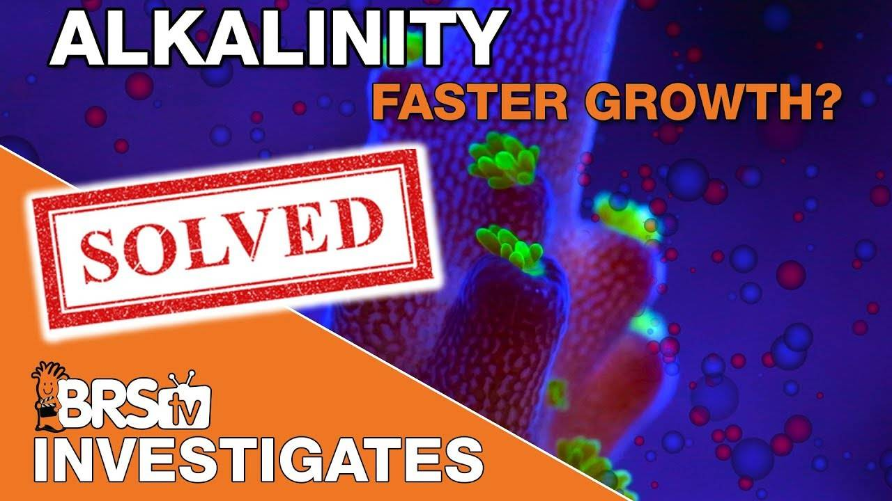BRStv Investigates: Faster coral growth by elevating major elements?