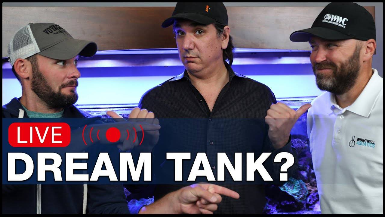 Ep1.1  Talking BRS360: Dream reef tanks, whats holding you back? Featuring Jeremy Howell