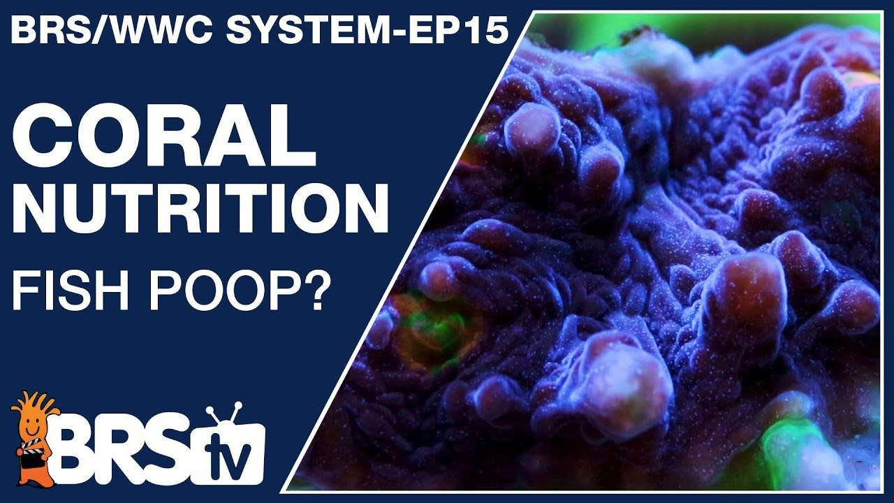 What do corals eat and how do I feed corals? - The BRS/WWC System Ep15 - BRStv