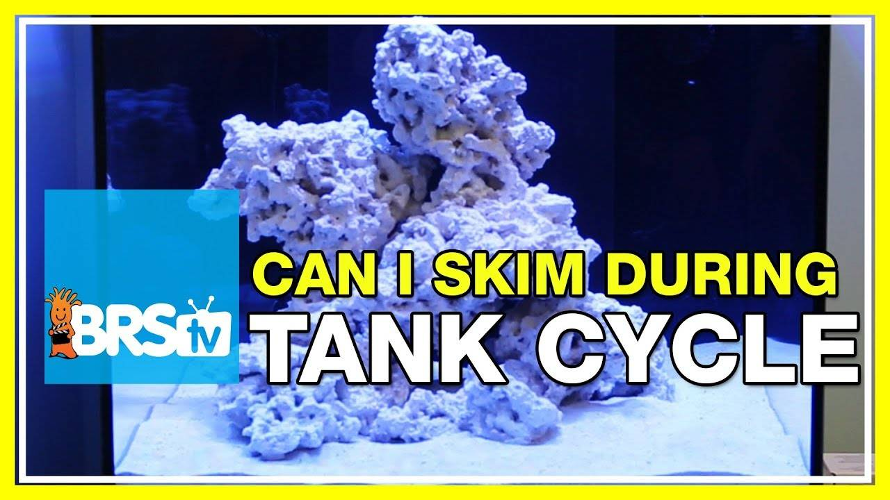FAQ #30: Should I run my protein skimmer during my tank cycle, and while curing rock?