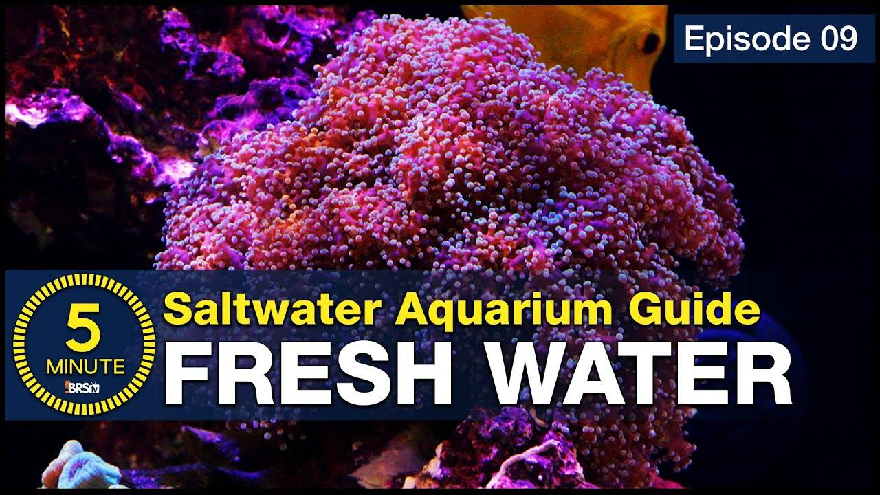 How to make the best water possible? The result is a thriving saltwater tank & RODI is the answer