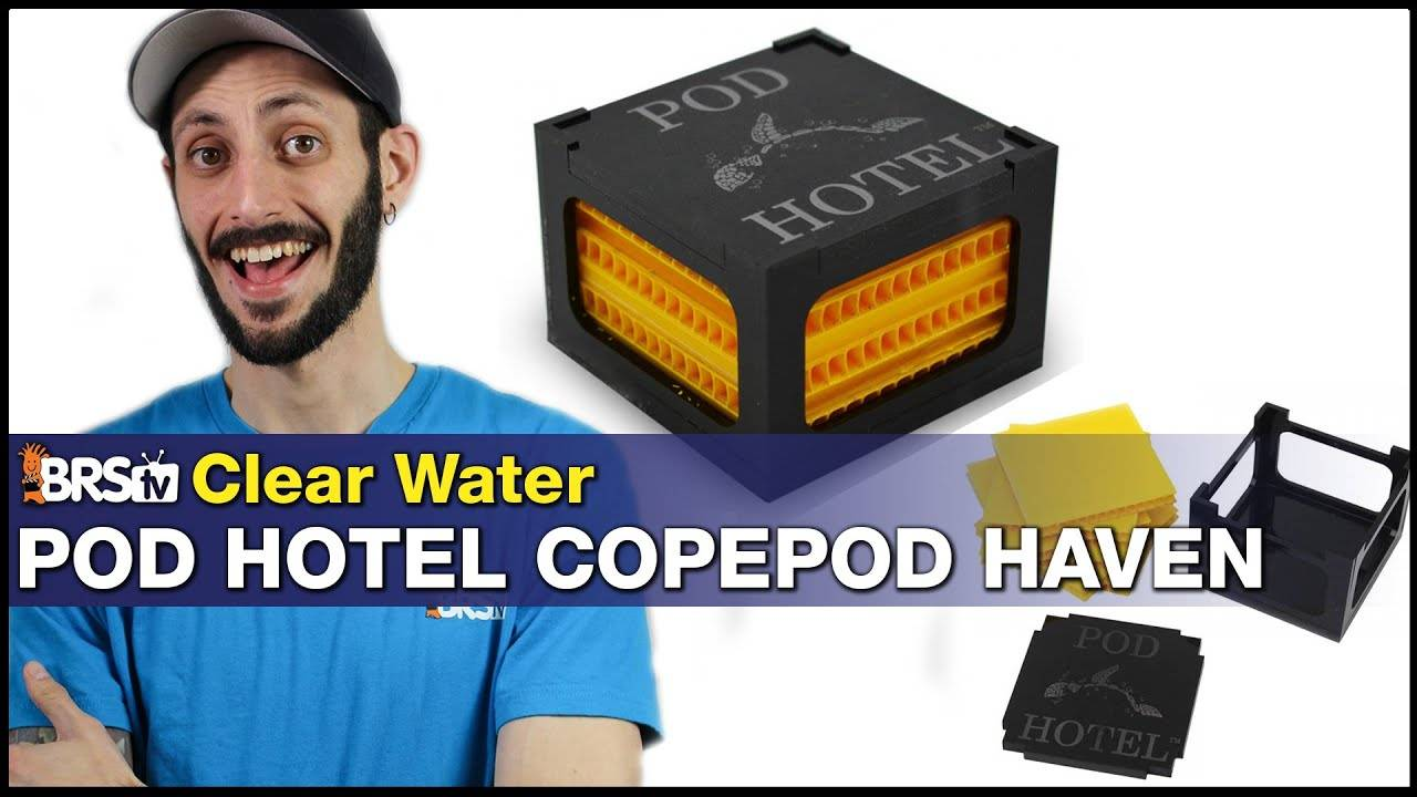 Clear Water Pod Hotel Is A Copepod Haven