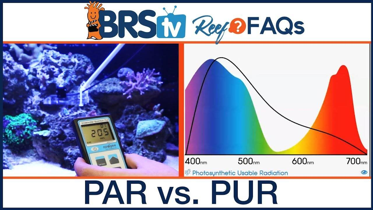 PUR vs PAR? What is more important when setting up your LED reef tank lighting? - BRStv Reef FAQs
