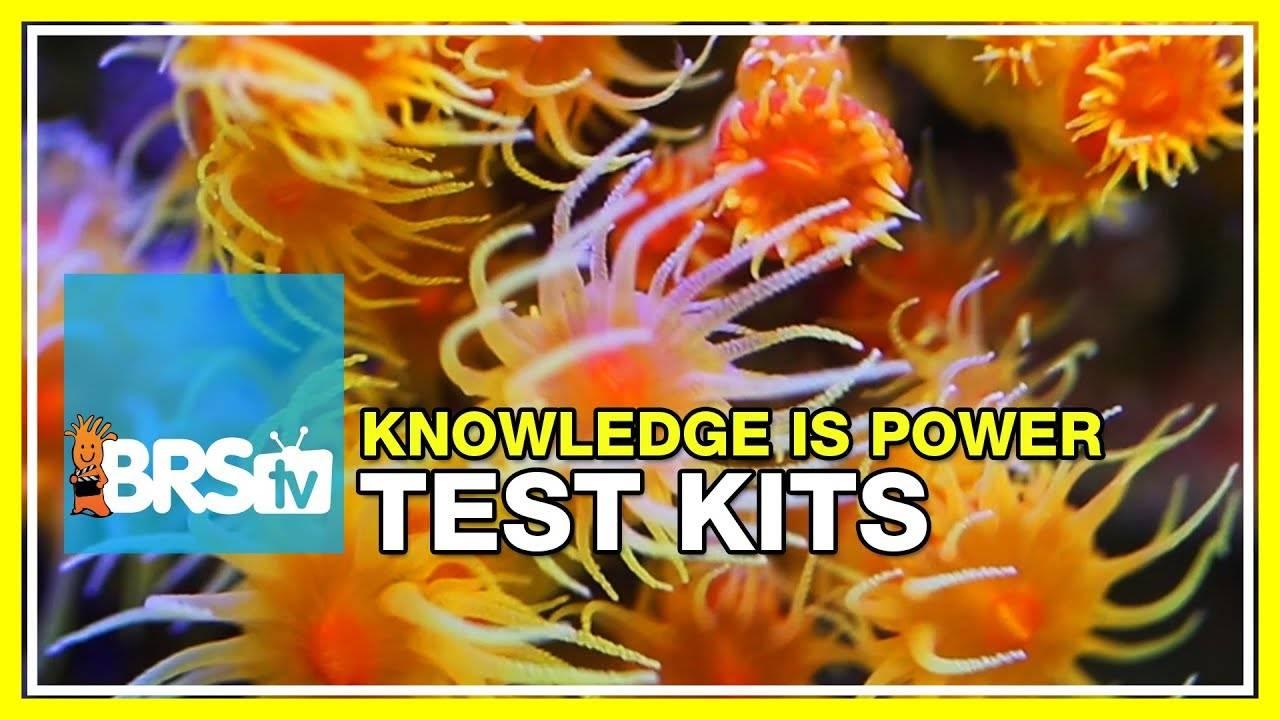 Week 34: Reef parameters: Our favorite test kits explained | 52 Weeks of Reefing #BRS160