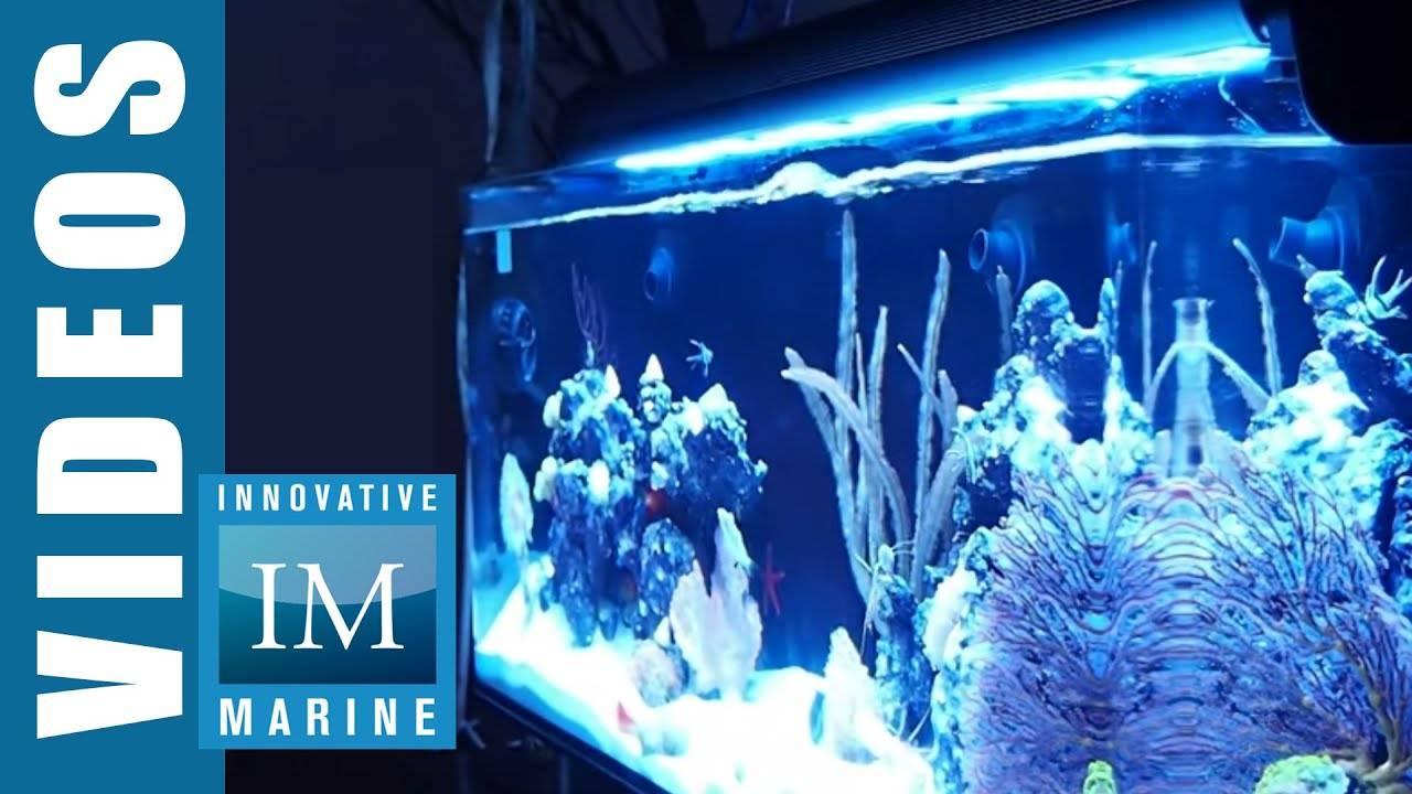 IM Nano 24 Nuvo Aquarium