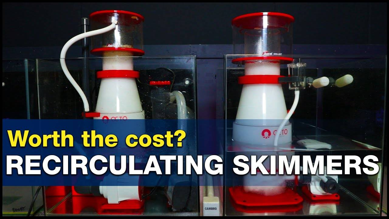 Is two better than one? Is a recirculating protein skimmer extra cost worth it? | BRStv Investigates