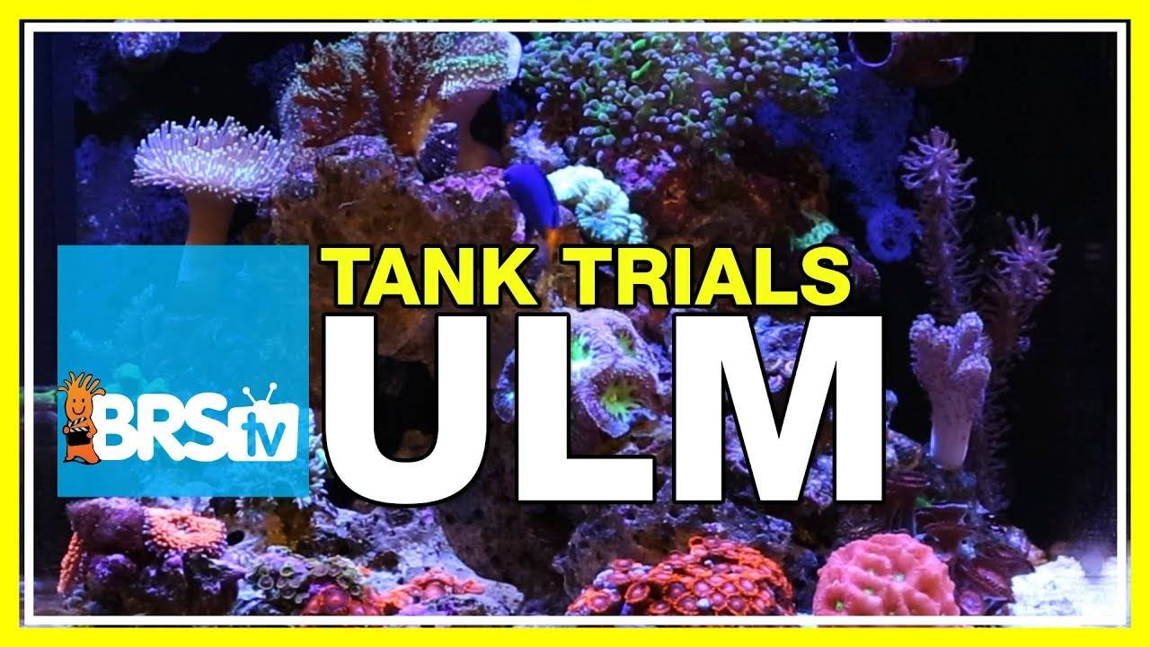 Welcome to BRS Tank Trials! Episode 1 | BRStv Tank Trials