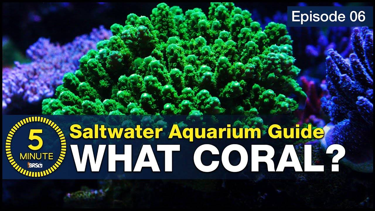 Watch Video - 10 best beginner corals. You don't have to be rich to stock a reef tank