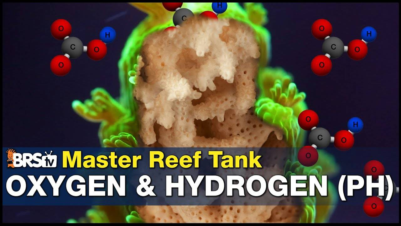 Learn How To Master pH In Your Reef Aquarium