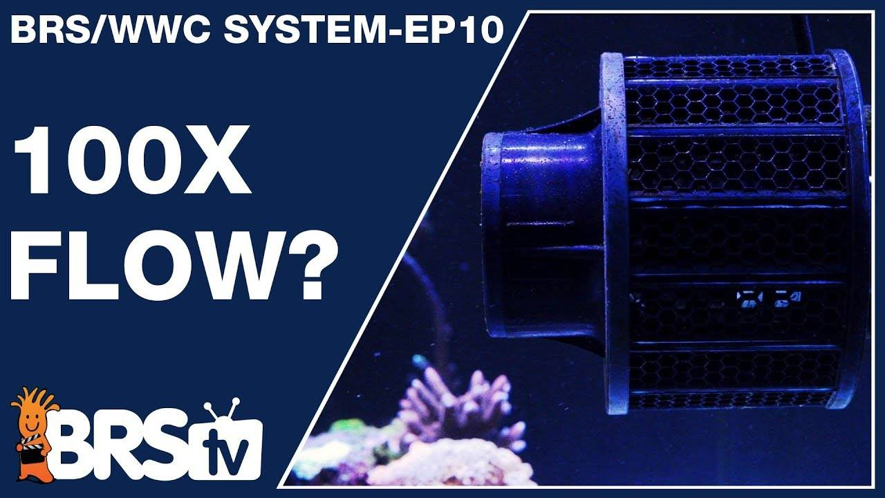 Just how important is flow in our reef tanks?  - The BRS/WWC System Ep10 - BRStv