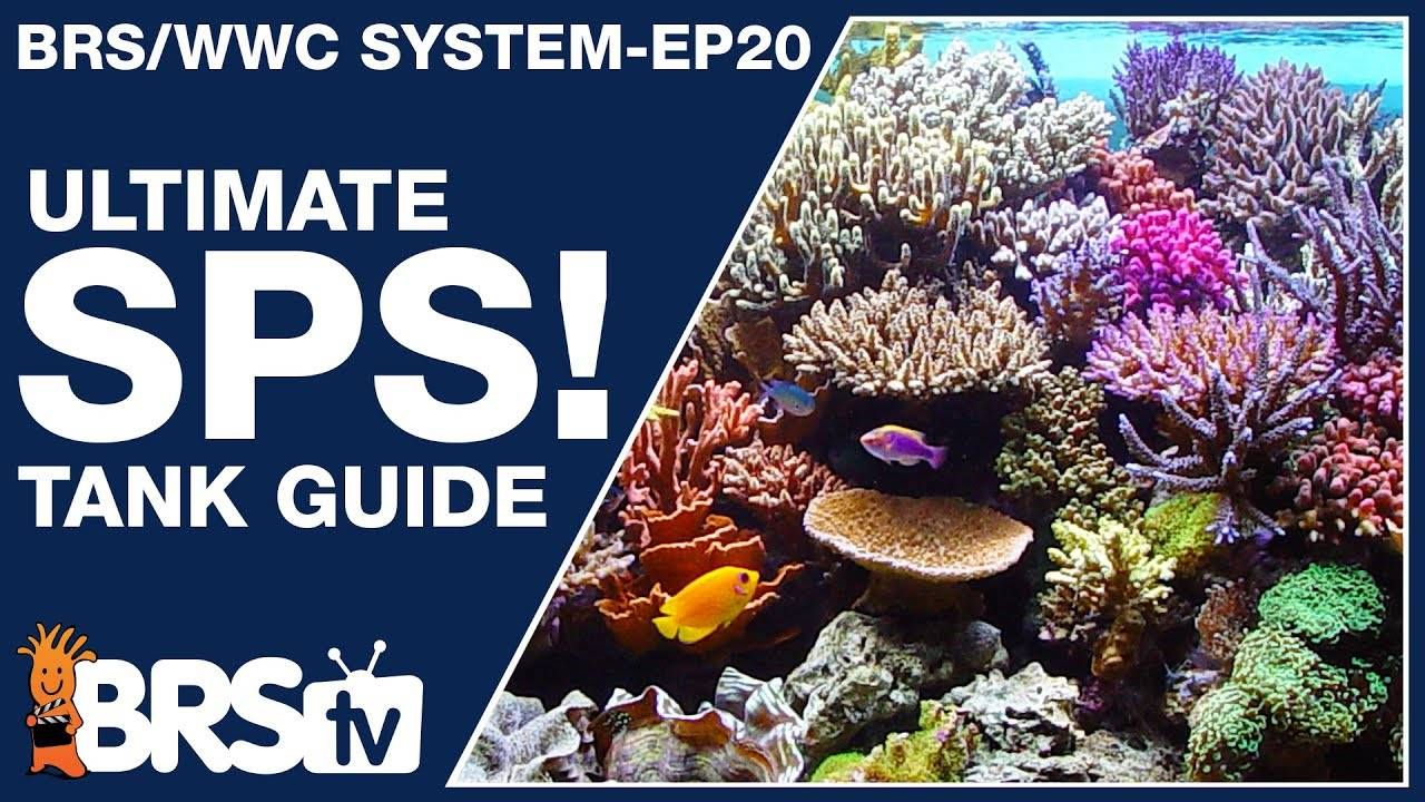 The only SPS reef tank setup guide you'll ever need! - The BRS/WWC System Ep 20