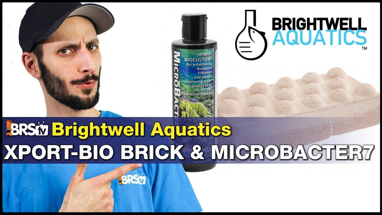 Boost Your Biofiltration With Brightwell Xport-Bio Media and Microbacter7
