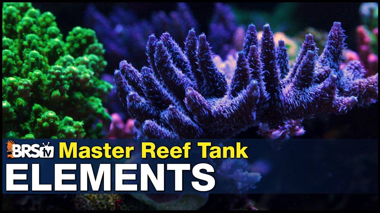 Mastering Elements: Pick a path for your reef tank. The Minimalist, Natural Seawater, or Trust Fall.