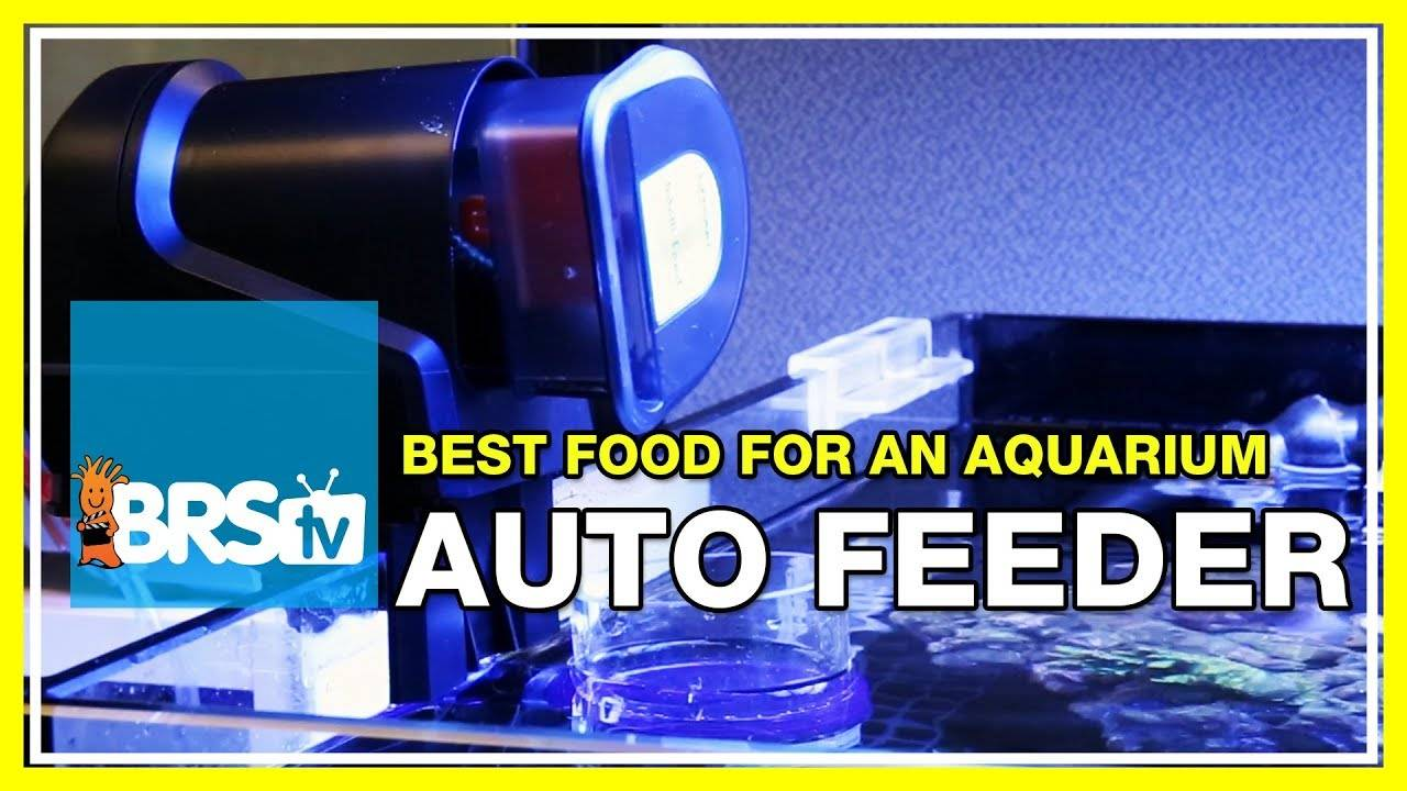 What's a good food to use with auto feeders for fish & corals? | 52 FAQ