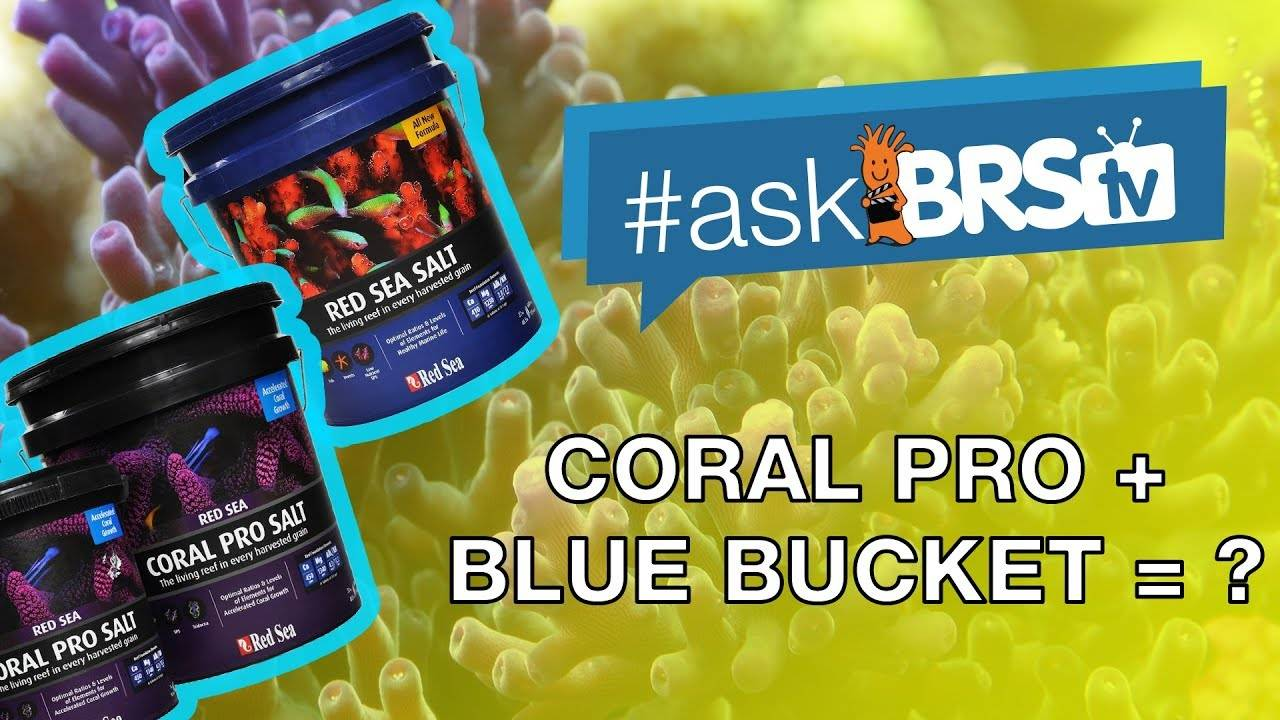 Can you mix Red Sea Coral Pro and regular Red Sea salt mix? | #AskBRStv