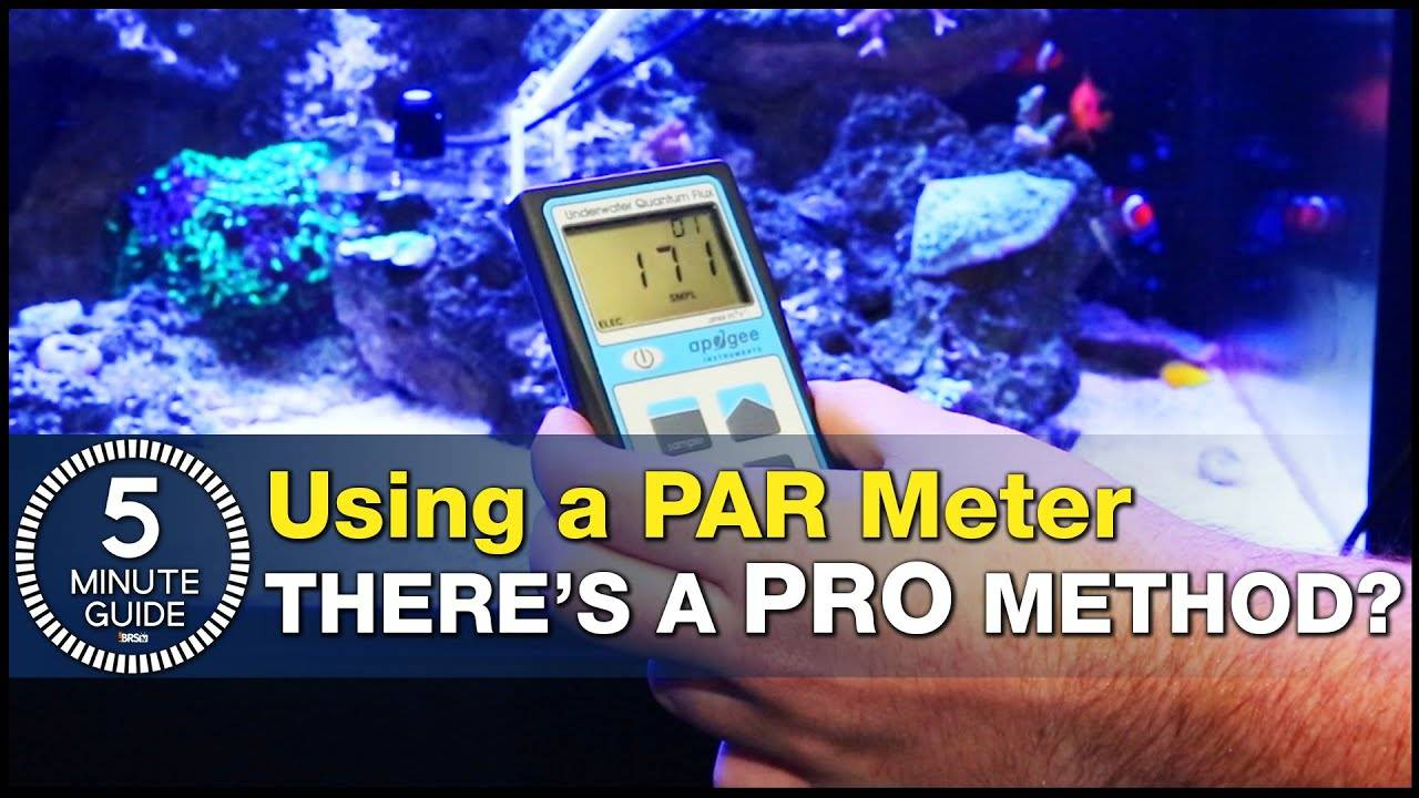 How to use a PAR Meter the RIGHT way! This is your 5-Minute Guide to PAR Meters