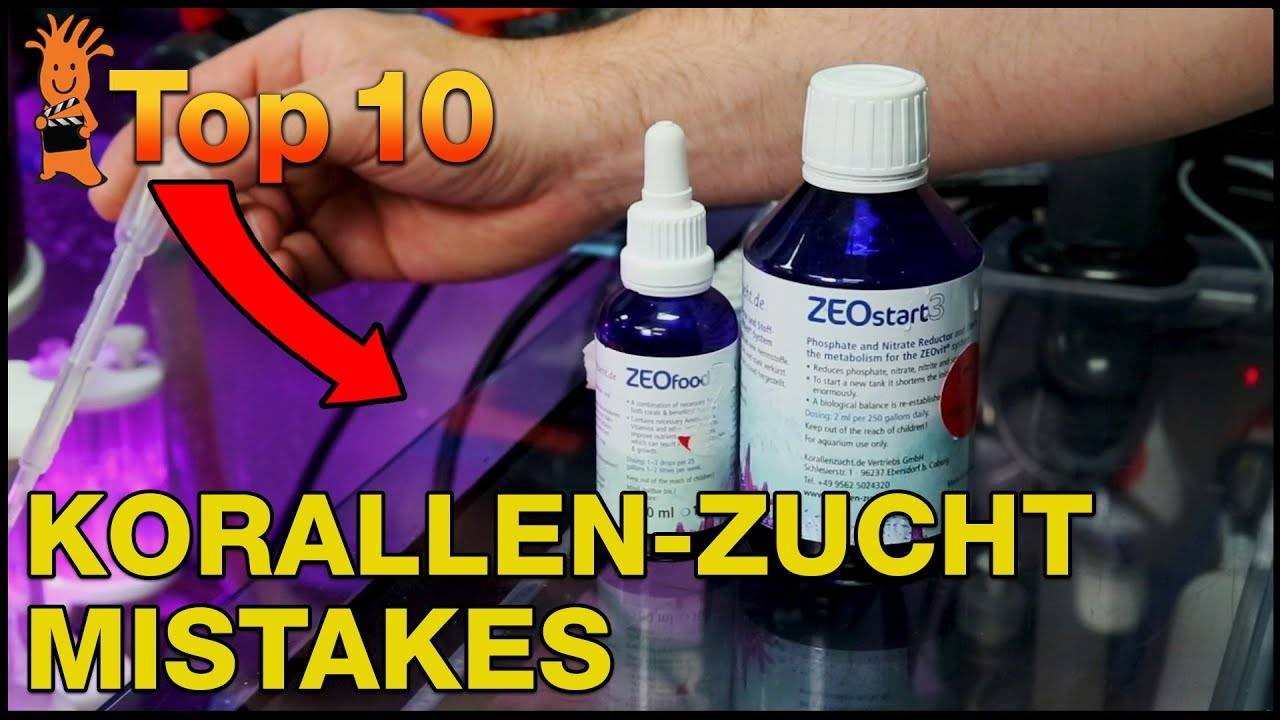 Top Mistakes Korallen-Zucht