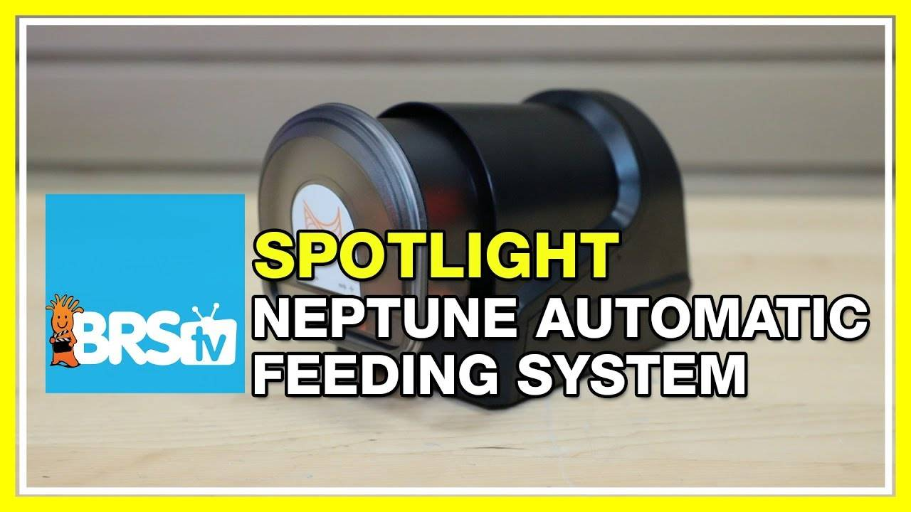 Busy life and hungry reef tank solved with the Neptune AFS - BRStv