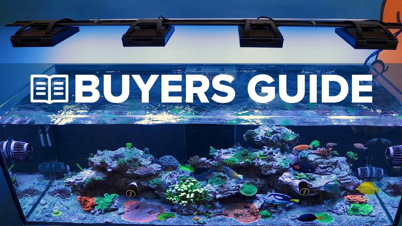 Buyer's Guide to Reef Tank LED Lighting