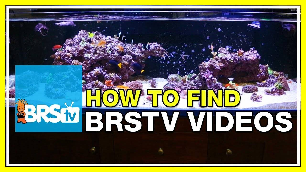 FAQ #44 So many BRStv videos, how do I find them all?