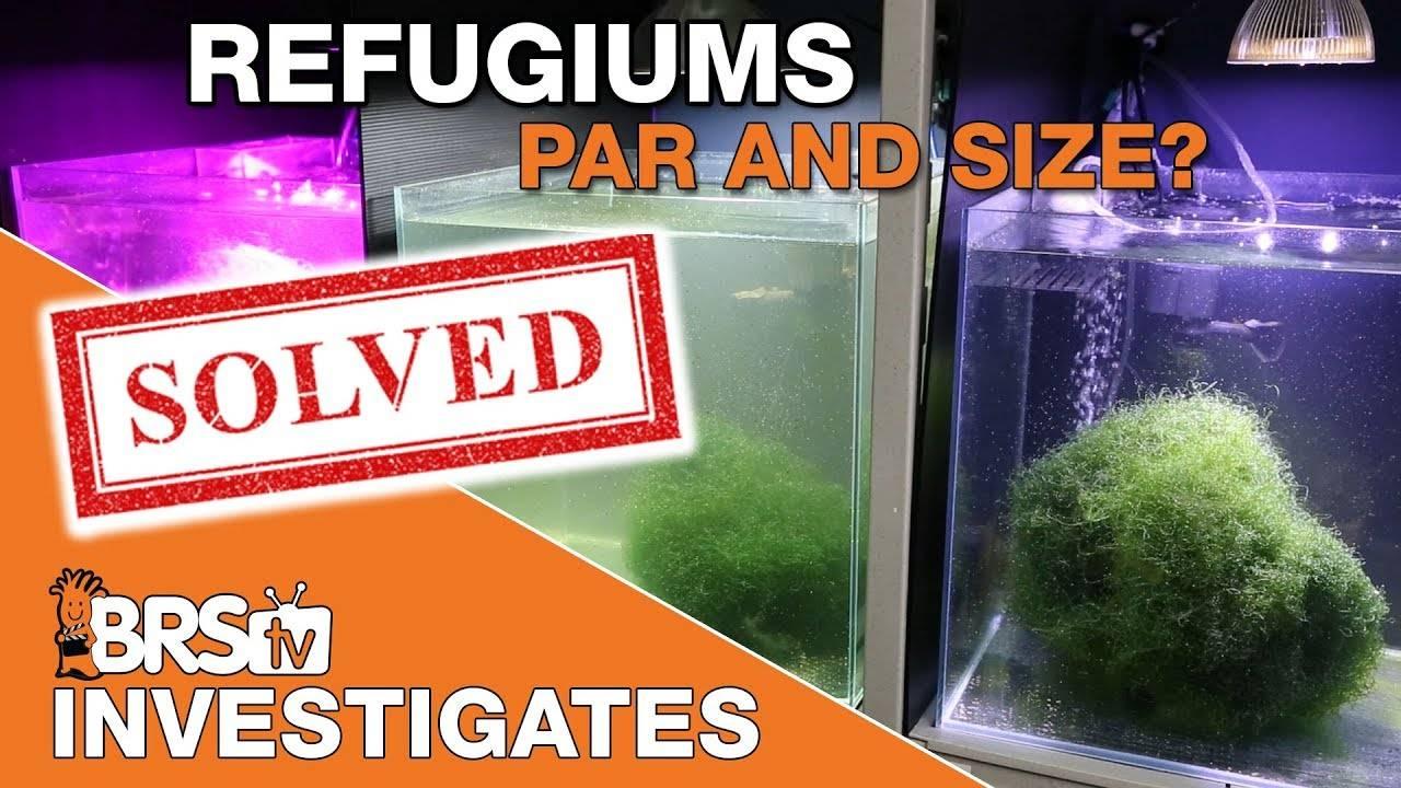 BRStv Investigates: Can Chaetomorpha in a refugium be the ideal reef tank filter?