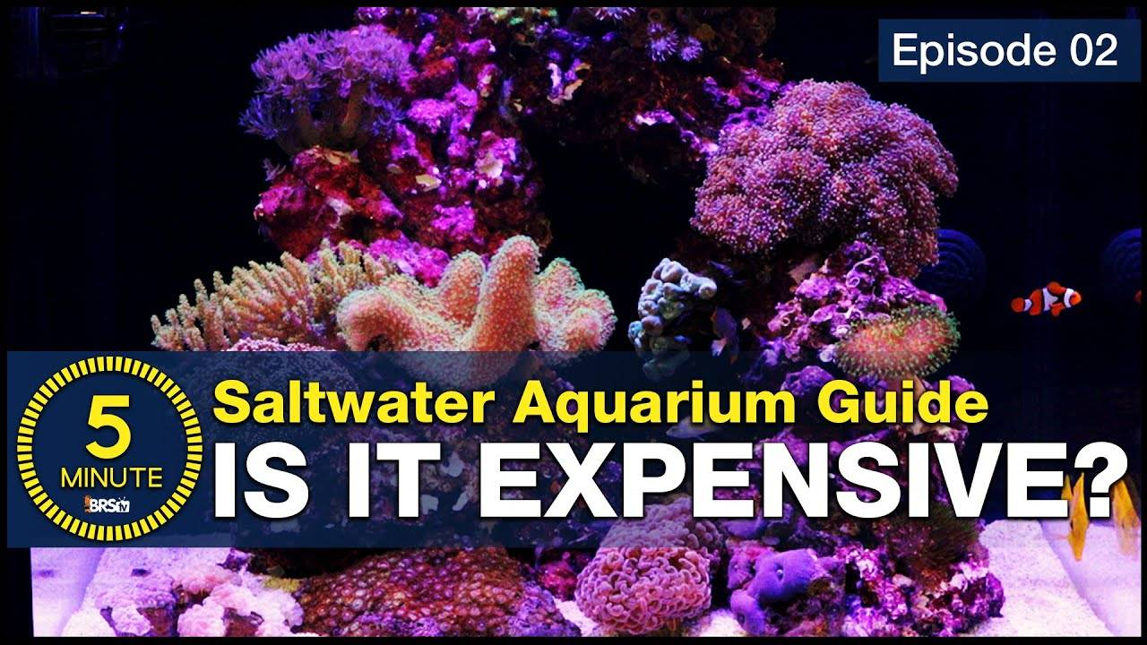 What is it going to cost? Setting up a saltwater tank or slice of coral reef in your living room.