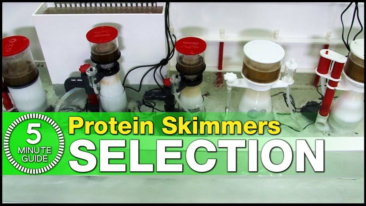 Which size of protein skimmer do you need? How to choose the right skimmer for your saltwater tank!