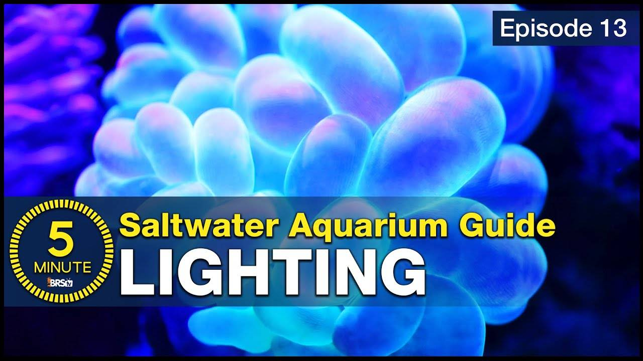 See how easy reef lighting a saltwater aquarium can be! Selecting the right reef LED solution