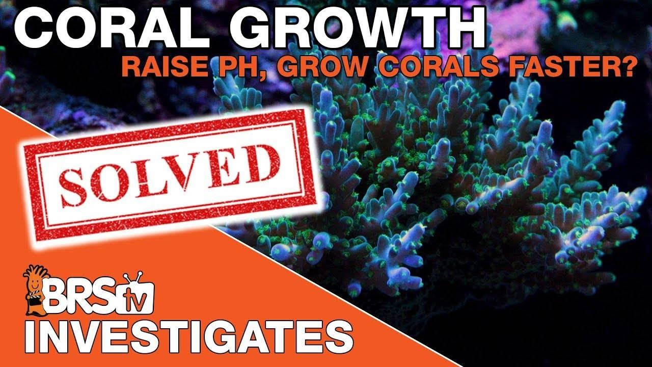 Reef Tank pH, benefits of raising saltwater aquarium pH - BRStv Investigates