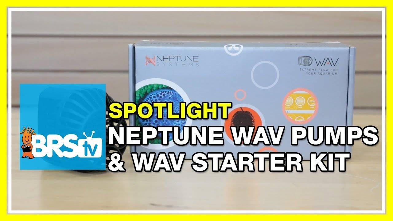 Optimized flow in your tank with the Neptune WAV pump - BRStv
