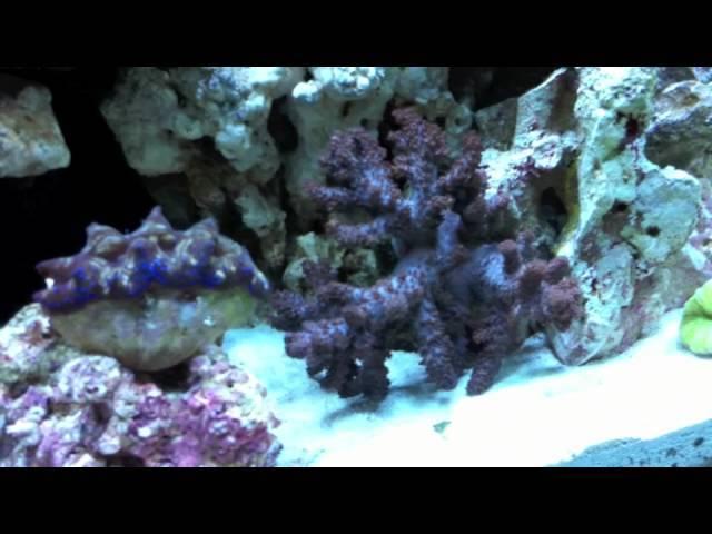 IM Nano 16 Nuvo Aquarium