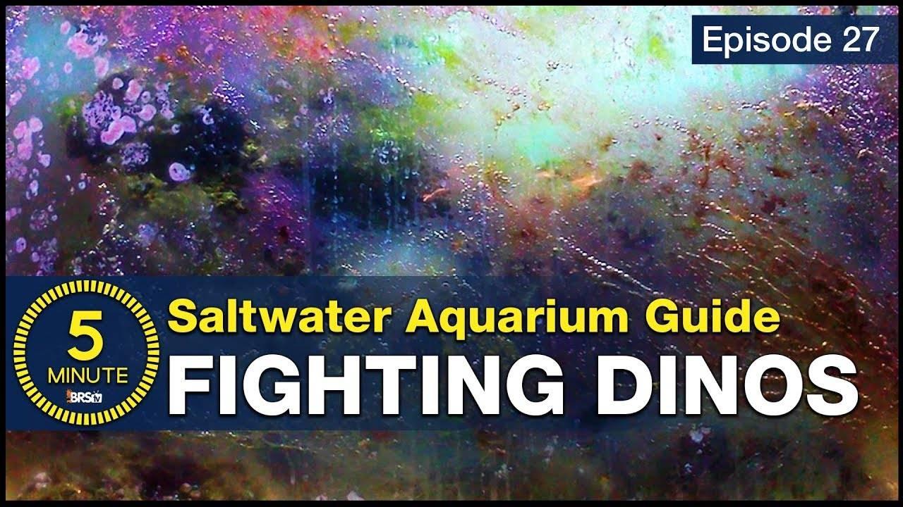 5 Minute Saltwater Aquarium Guide Episode #27 - Dinoflagellates