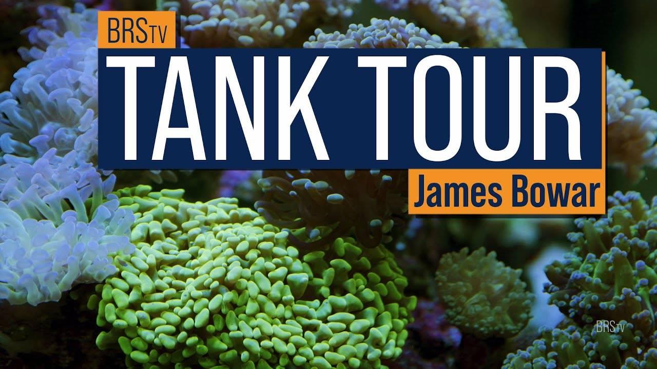 BRStv Tank Tour - James' 120 Gallon Mixed Reef and 80 Gallon Frag Tank